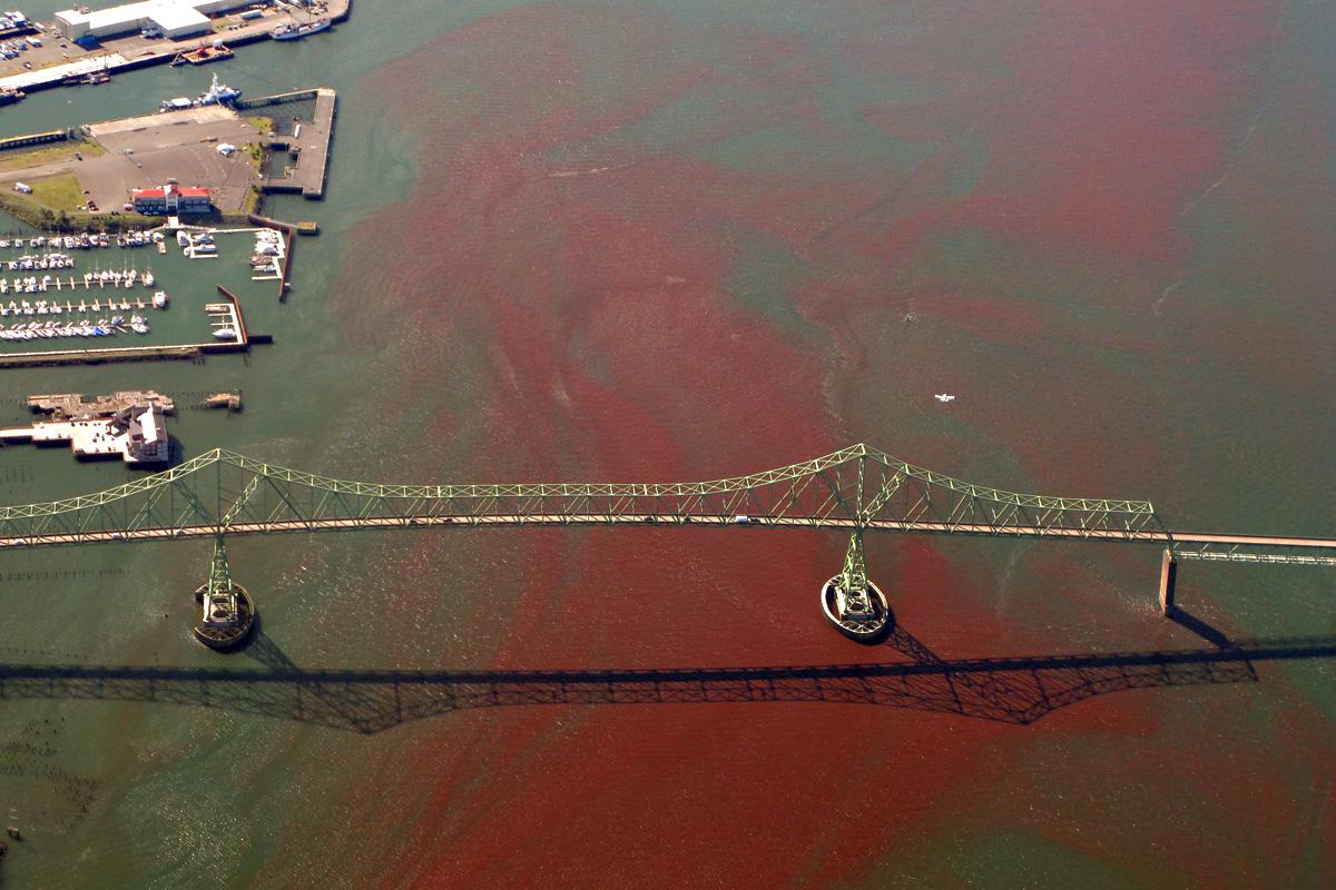 Rote Tide