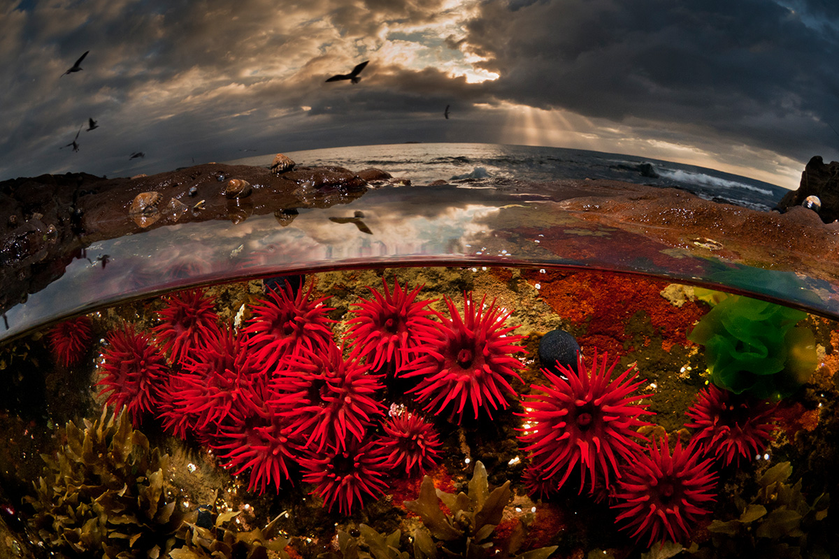 International Wide Angle, highly commended: 'Waratah Anemones at Sunrise' Matthew Smith (Australien)