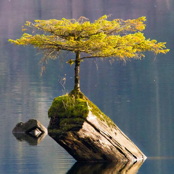 Der Star vom Fairy Lake