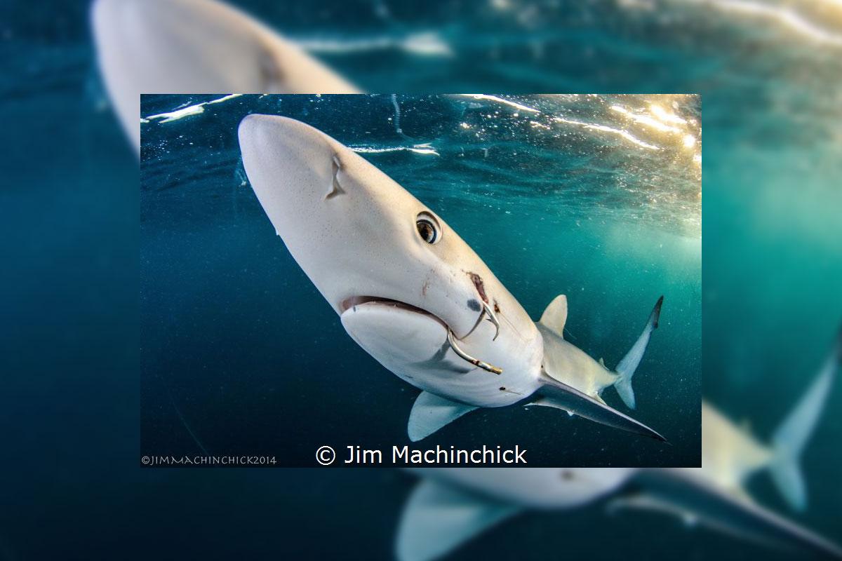 Jim Machinchick: Gold in der Kategorie Sharks