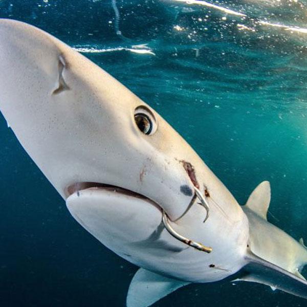 Die besten Fotos aus der Welt unter Wasser